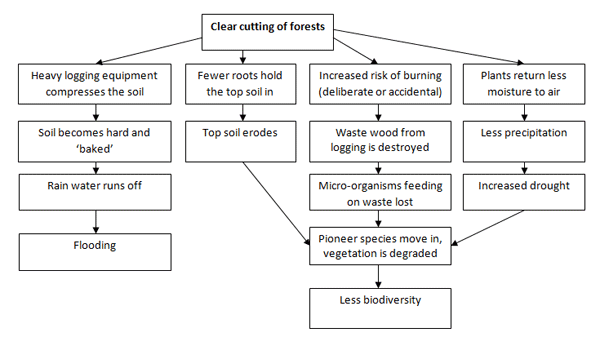 deforestation essay in simple words Large areas of rainforests are burned away to create grasslands where cattle are brought in to graze [tags: deforestation essays] 905 words (26 pages.