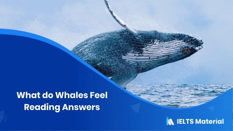 What do Whales Feel Reading Answers