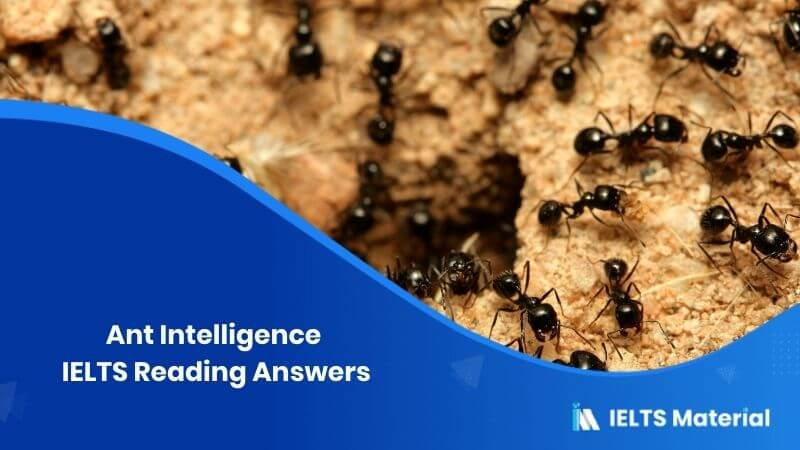 Ant Intelligence IELTS Reading Answers