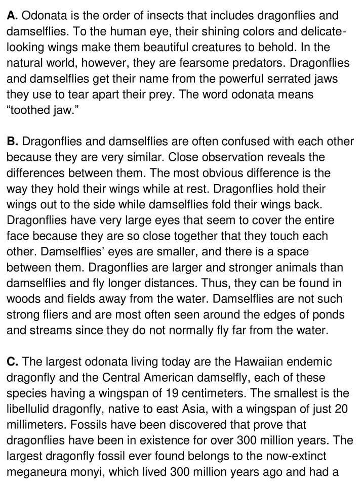 Odonata - 0001