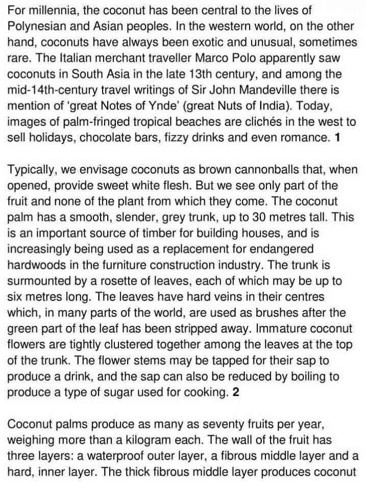 coconut palm - 1