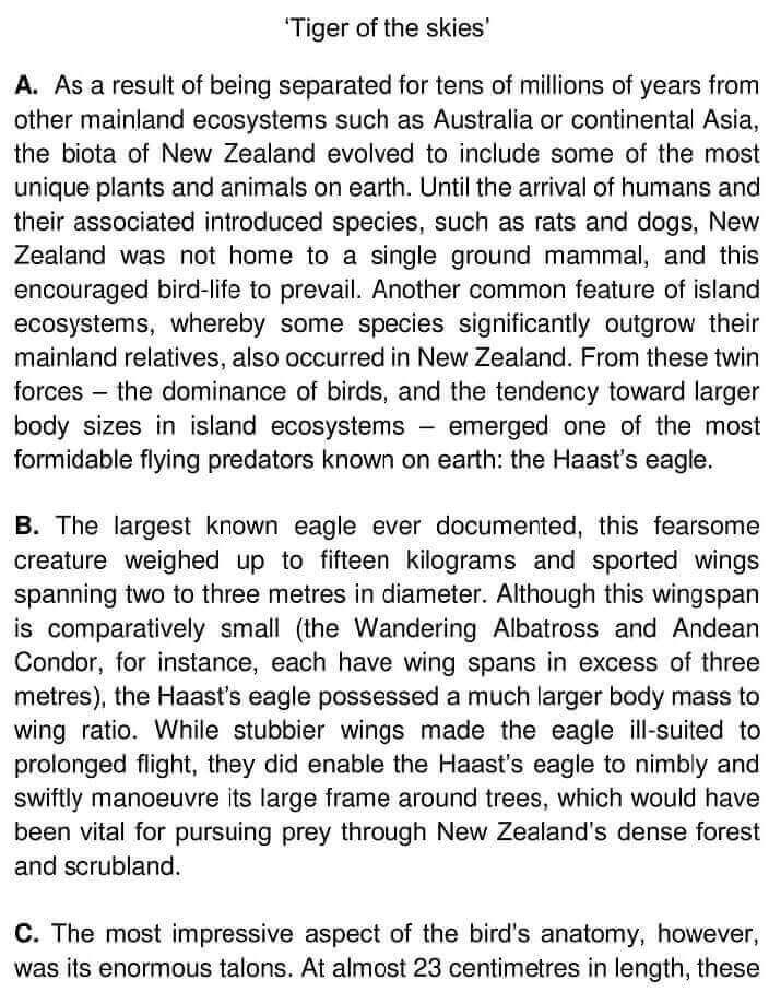Haast's Eagle - 0001