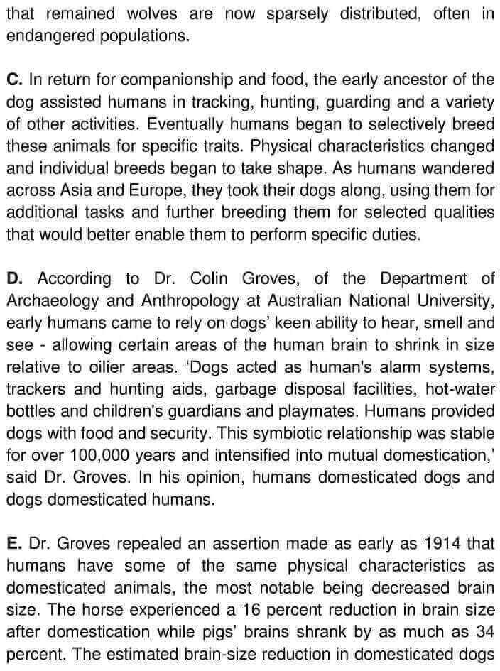 Wolves, Dogs And Humans - 0002