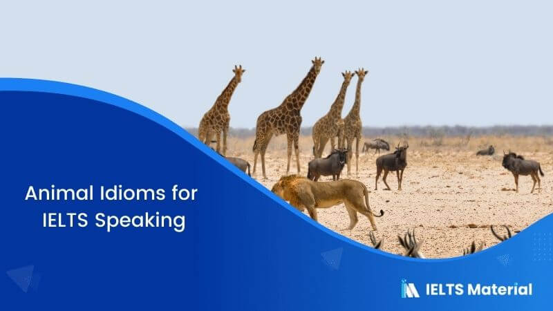 Animal Idioms for IELTS Speaking