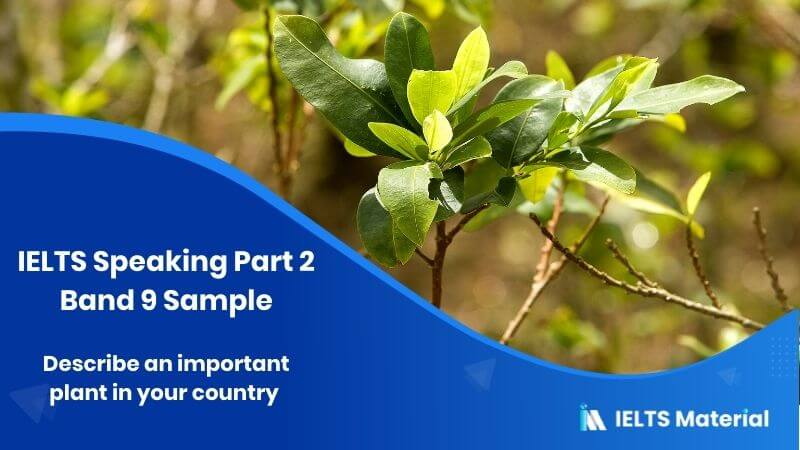 Describe an important plant in your country - IELTS Speaking Part 2 Band 9 Sample