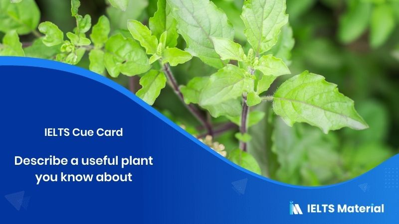 Describe a useful plant you know about – IELTS Cue Card